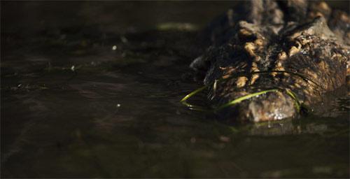 Black Water: Abyss Krokodil