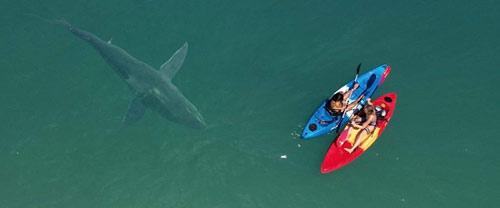 Shark Season Hai umkreist Beute